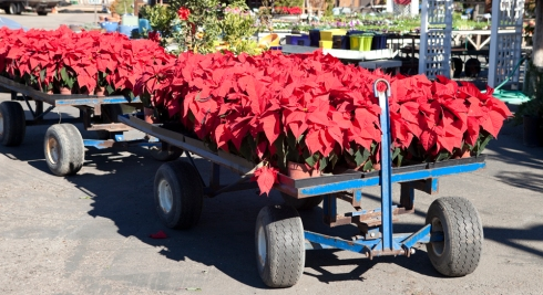 Poinsettia Cart at Sunshine Gardens